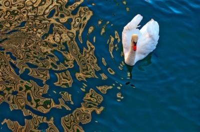 Jack Gilbert, White Swan, 21x14