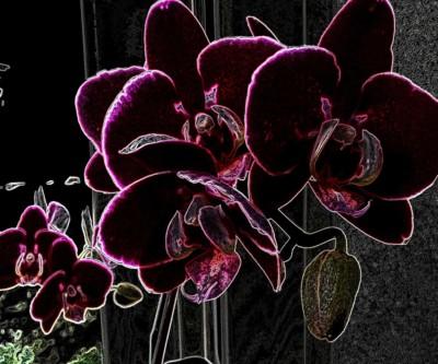 Saskia Rueb, Orchids, 20x24